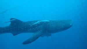 巨大な魚!!!