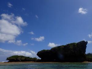 カラフルな熱帯魚と泳ぐ