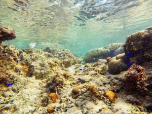 熱帯魚コース