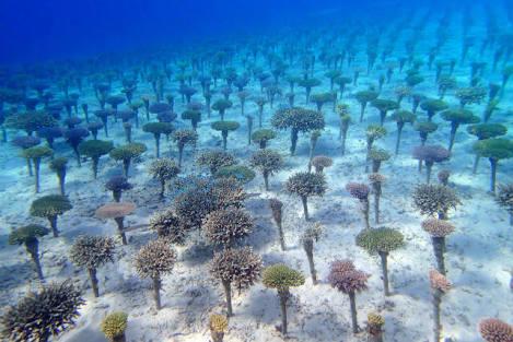 サンゴと魚たち^ ^