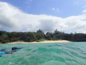 熱帯魚体験ダイビング(^。^)